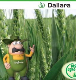 """NSAGRO-ING – ekskluzivni distributer semenske pšenice """"Dallara"""""""
