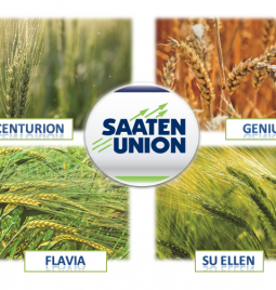 SAATEN UNION semenska pšenica i ječam