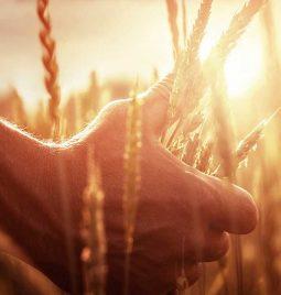 Zaštita strnih žita